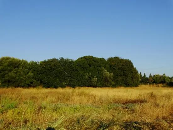 Çeşme Mamurbaba'da Satılık 5 Dönüm Arazi